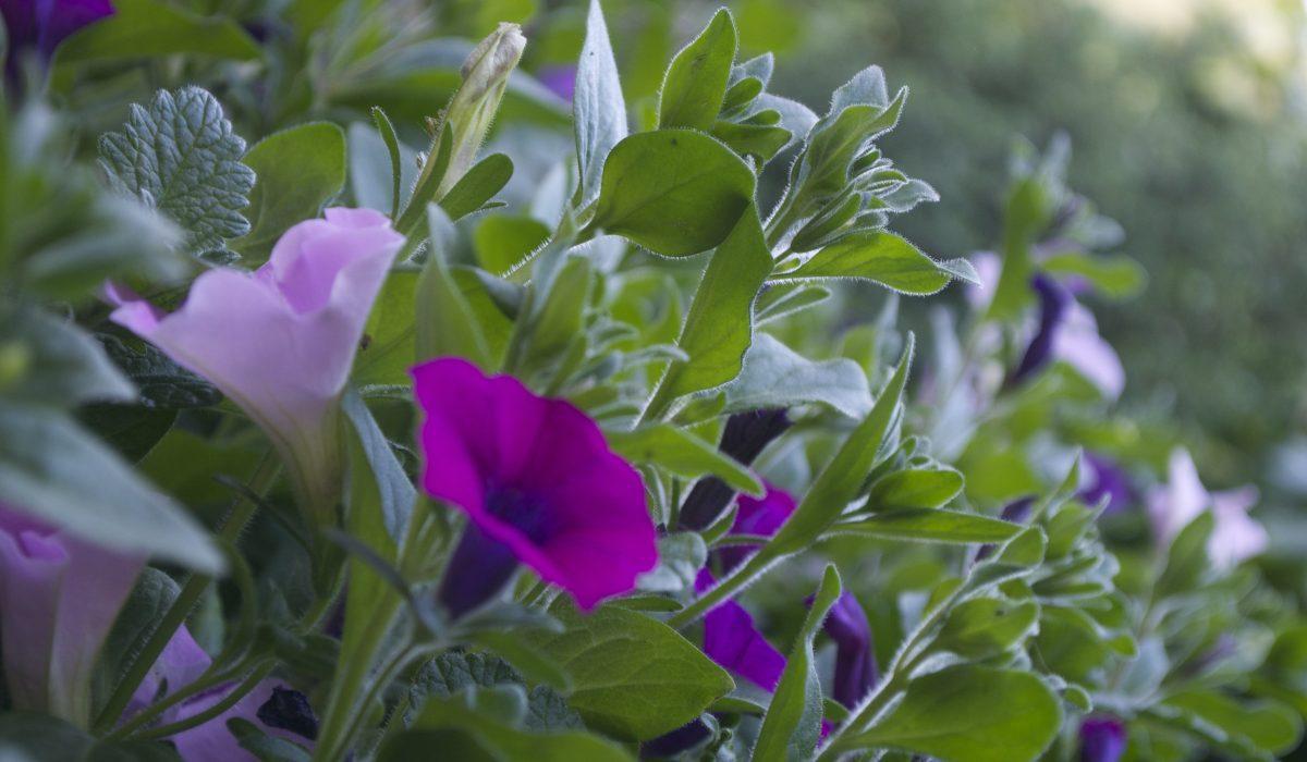 Beplanting tuinen Putten